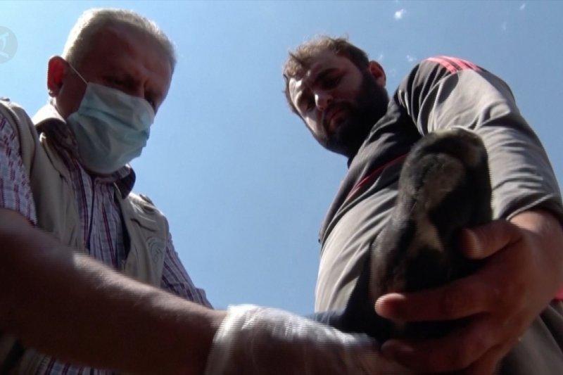 Dokter hewan yang merawat ternak para pengungsi di perdesaan Irak
