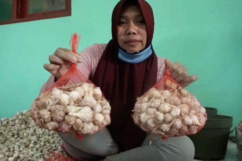 Indonesia kejar swasembada bawang putih