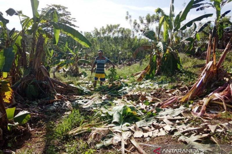 Atasi gangguan gajah, BKSDA sarankan pembangunan CRU di Nagan Raya