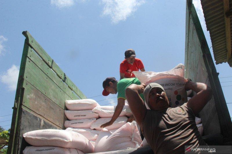 Puluhan ribu petani Tulungagung tak bisa dapatkan pupuk bersubsidi