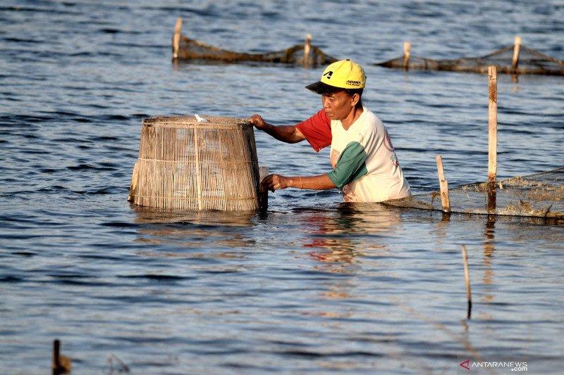 Edhy Prabowo: Pendampingan dan modal jadi masalah korporasi nelayan