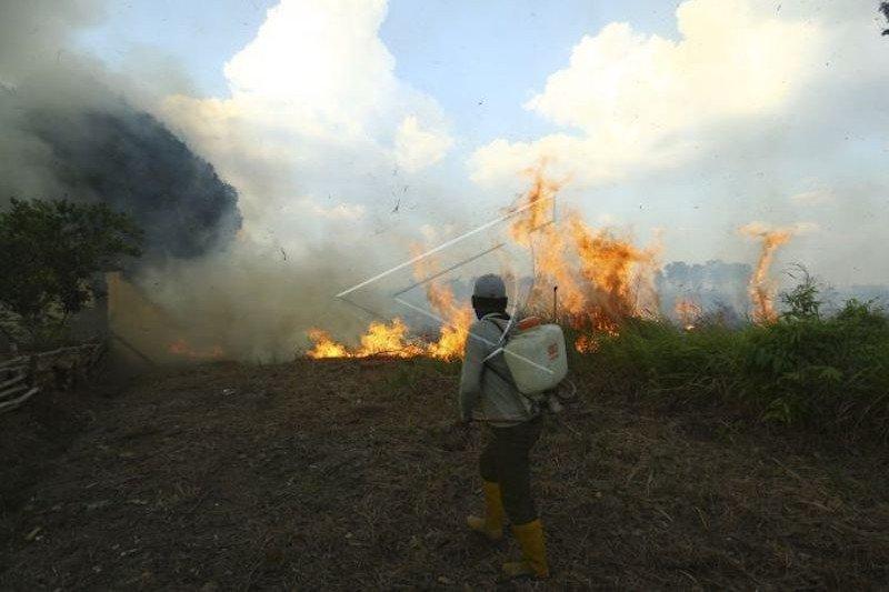 250 Hektare lahan terbakar Juli-Agustus 2020 di Sumatera Selatan