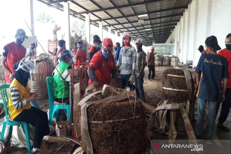 Alasan mengapa serapan tembakau petani Temanggung belum optimal
