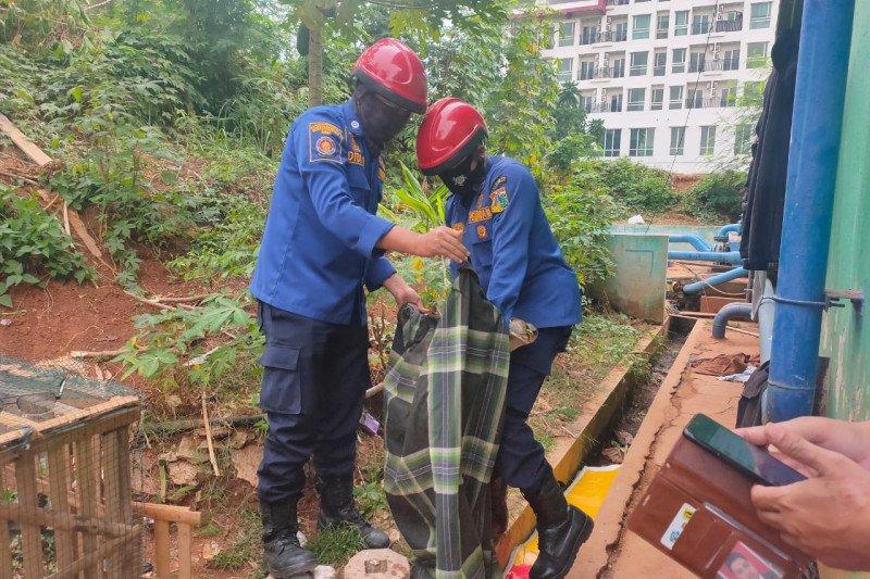 Ular sanca tiga meter  masuk ke apartemen di Jakarta Selatan