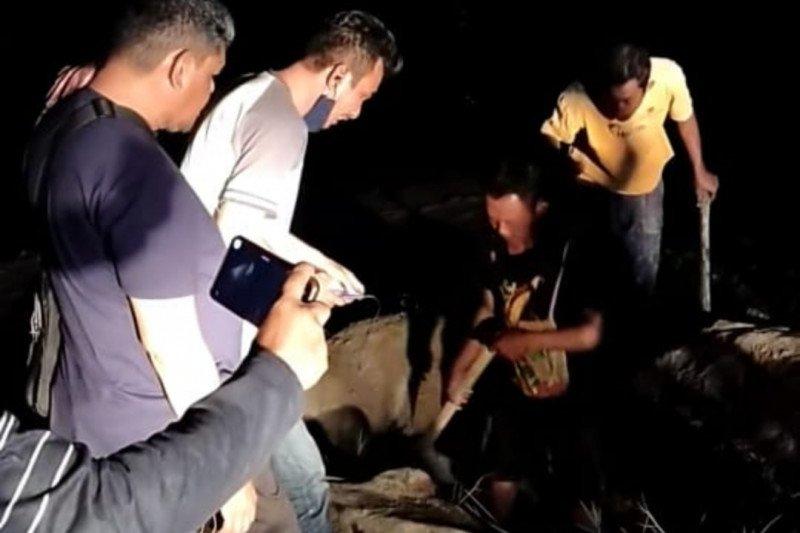 DKP NTT-WWF Foundation kuburkan mamalia mati terdampar di Pantai Pede
