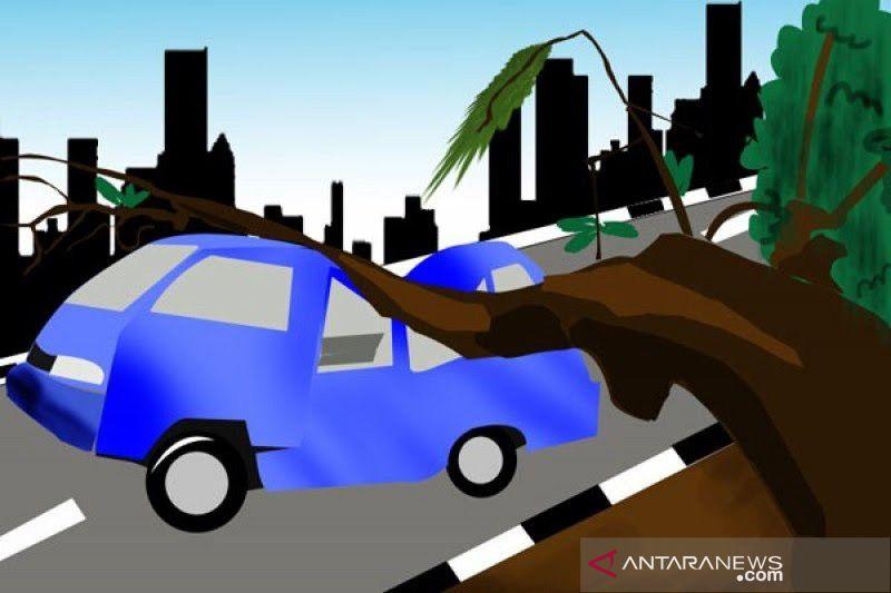 Dua orang terluka akibat tertimpa pohon tumbang di Depok