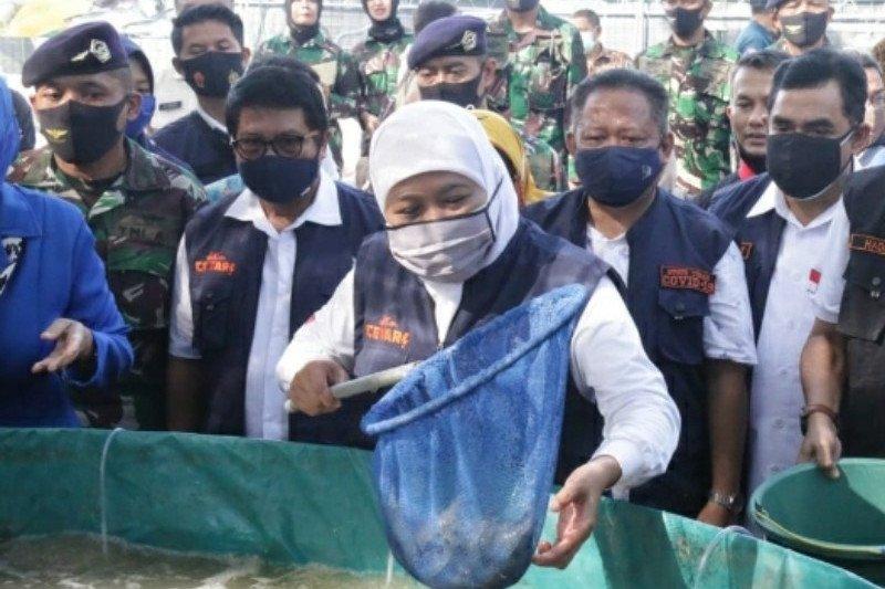 Ekspor udang Jawa Timur meningkat di masa pandemi