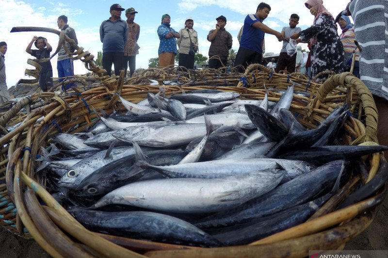 Legislator sebut ide lumbung ikan nasional cukup menjanjikan