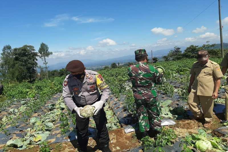 Kodim dan Polres Wonosobo borong sayuran petani