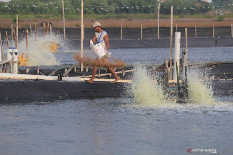 Pengamat: Pastikan naiknya nilai tukar pembudi daya ikan berkelanjutan