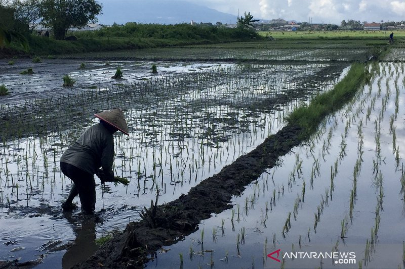 Pemkab Malang dorong inovasi di sektor pertanian