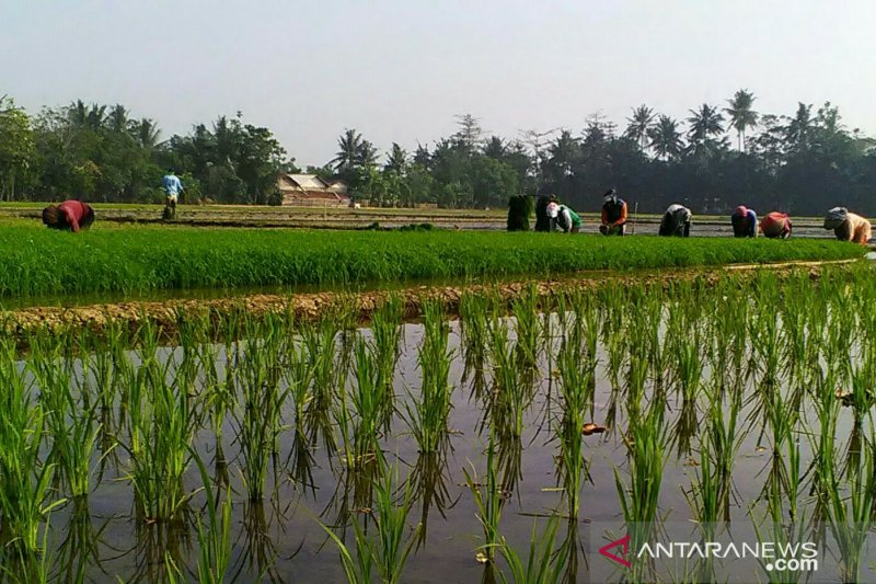 Dinas Pertanian Karawang menunggu tambahan kuota pupuk bersubsidi