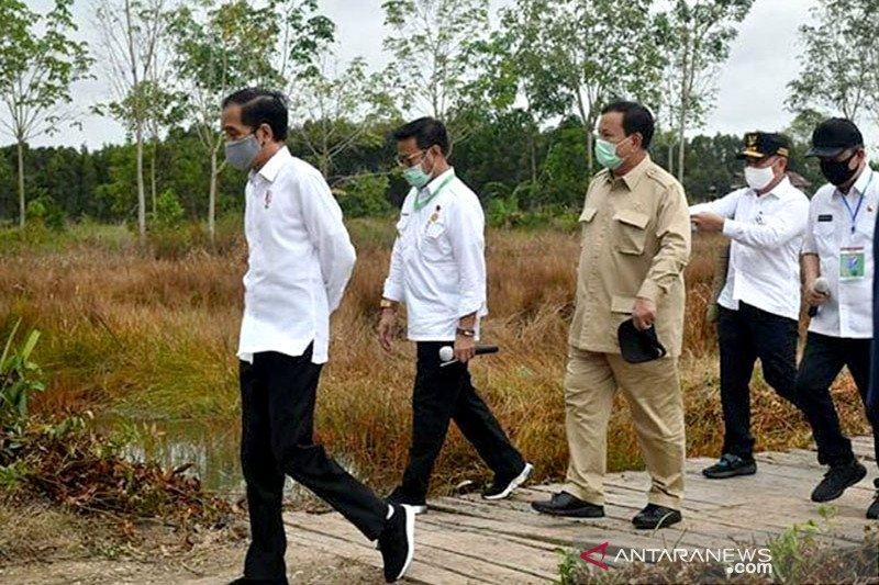 Prabowo targetkan 1,4 juta hektare lahan singkong pada akhir 2025