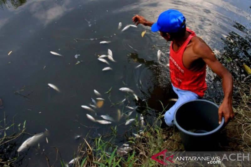 DLHK temukan dugaan pencemaran lingkungan PMKS di Nagan Raya Aceh