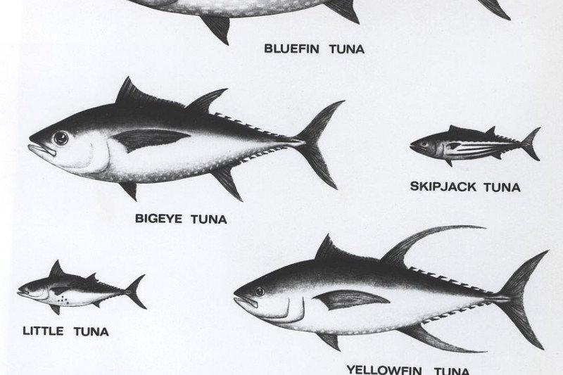 Program diperluas, Gemarikan tidak hanya tingkatkan konsumsi ikan