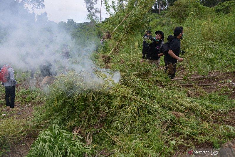 Polisi musnahkan temuan 10 hektare ladang ganja di Aceh