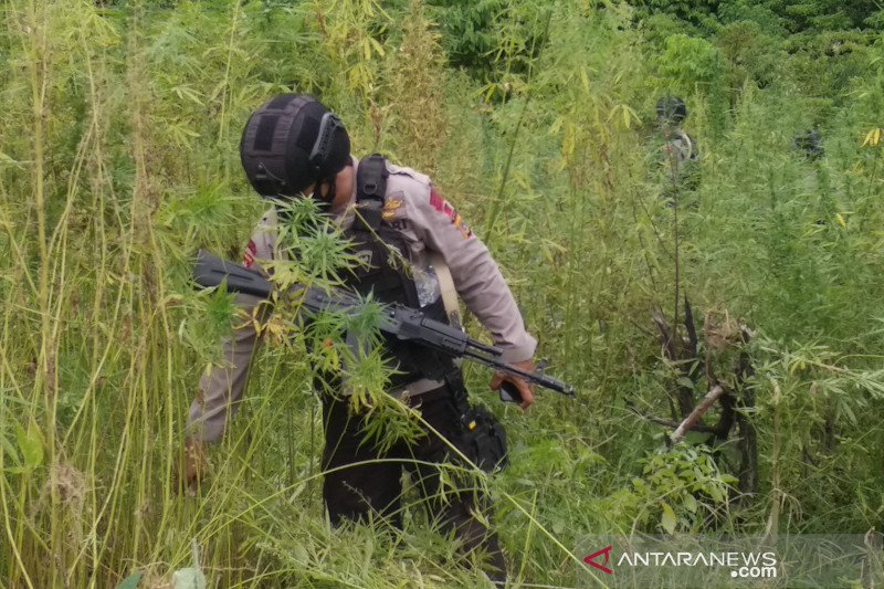 Bareskrim Polri musnahkan 10 hektare ladang ganja di Aceh Besar