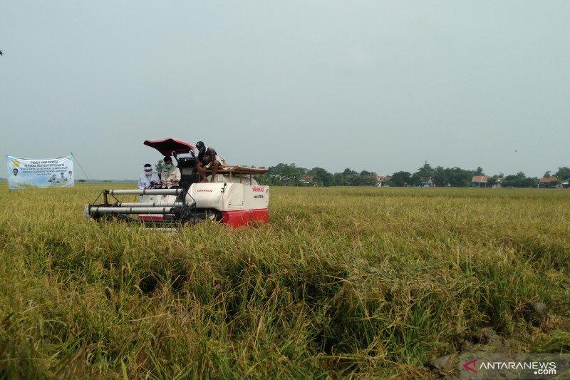 Karawang optimistis capai target produksi 1,35 juta ton padi