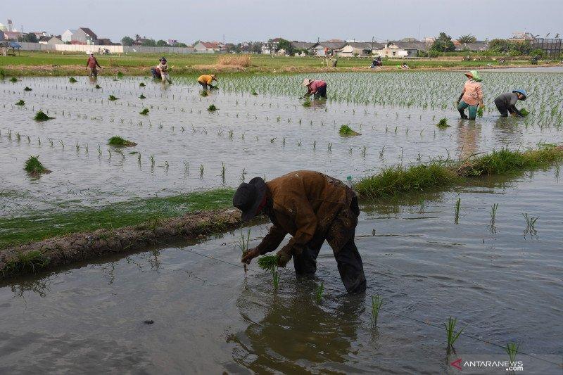 Jakarta Utara benahi sistem irigasi pertanian