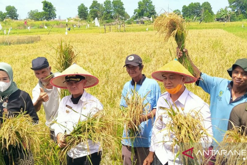 Semangat Bangka wujudkan swasembada beras