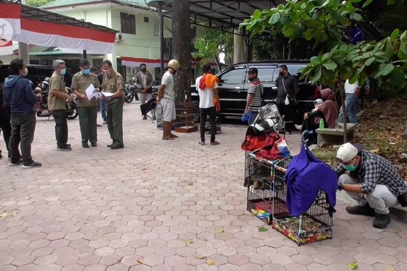 Pendaftaran kepemilikan burung hias langka di kantor BBKSDA Sumut