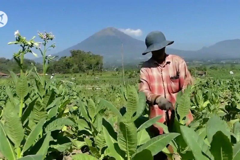 Sinergi regulasi jadi tantangan industri tembakau