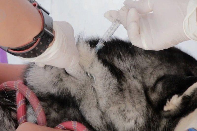 Hari Rabies Sedunia, Disperikan Temanggung bagikan 200 vaksin gratis