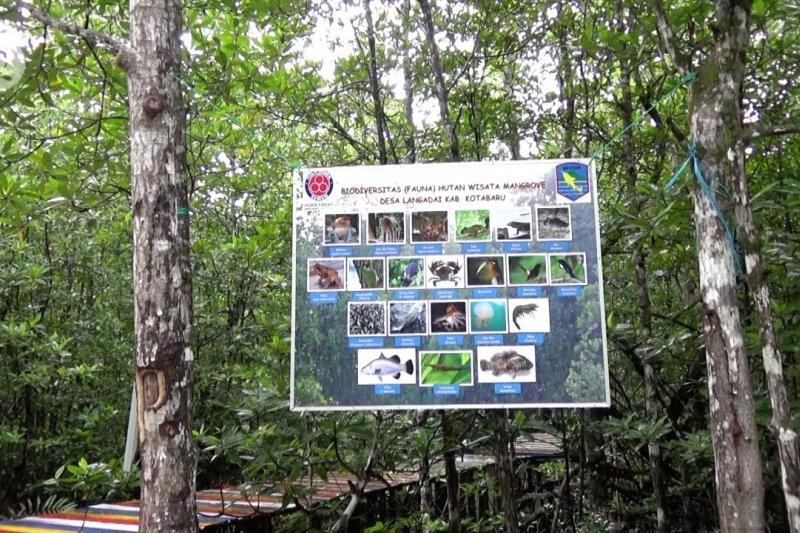 Wisata hutan mangrove Desa Langadai, Kotabaru