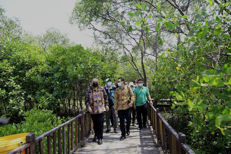 Pemenang Scroll of Honour Award kagumi keindahan mangrove Surabaya