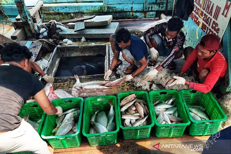Usaha perikanan di Kepri terpukul akibat pandemi, harga ikan anjlok