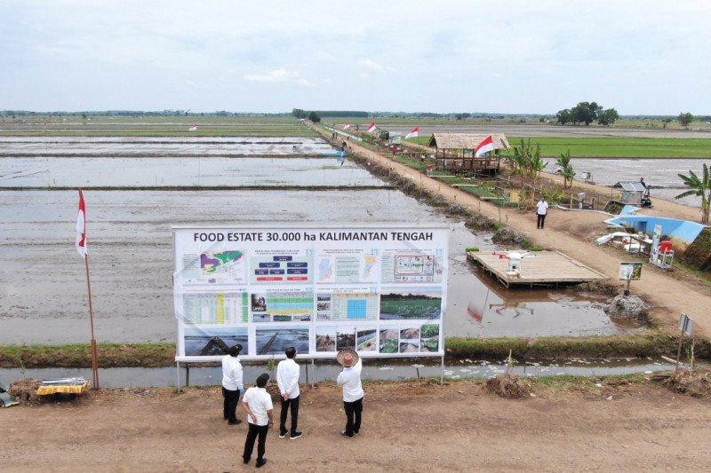 Food Estate, belajar dari proyek lahan sejuta hektare