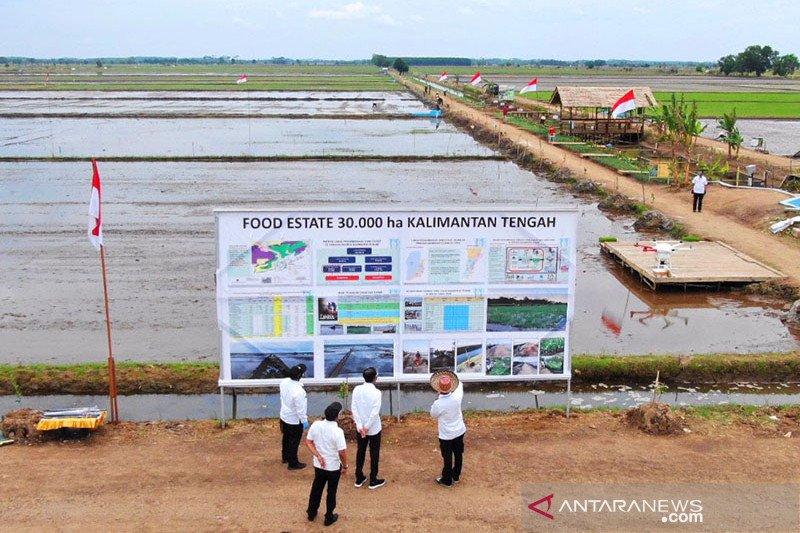 """Kementan targetkan produktivitas padi """"food estate"""" capai 6 ton/ha"""