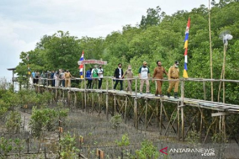 Lewat Program Padat Karya, Babel tanam mangrove seluas 50 hektare