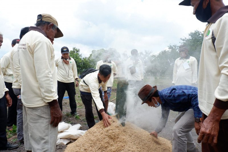 Latih petani lahan gambut, BRG dukung ketahanan pangan di Merauke