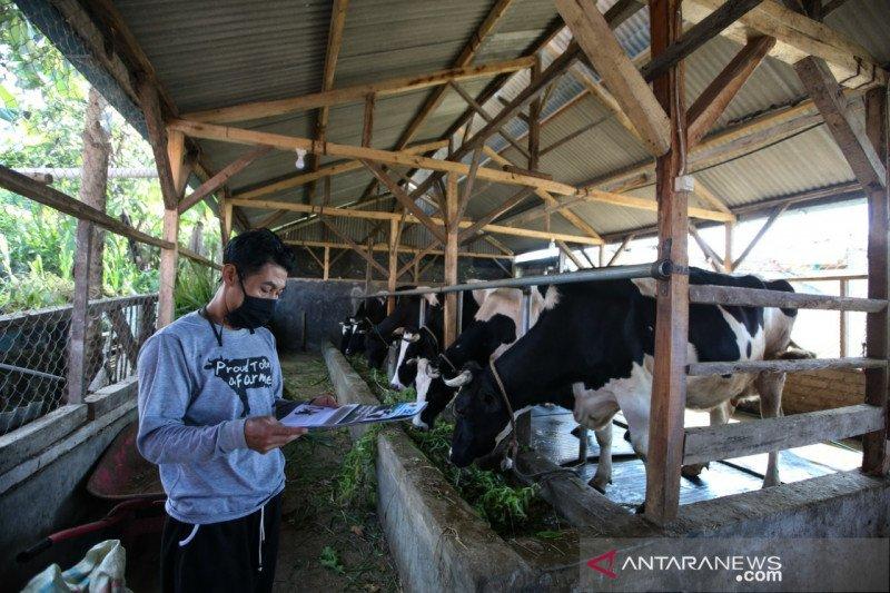 Kolaborasi peternak sapi dan swasta dukung ketahanan pangan