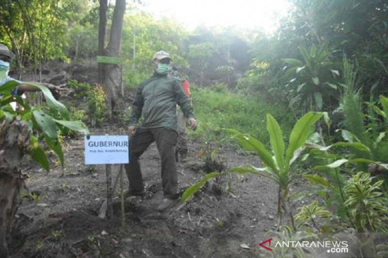 Gubernur Babel tanam 1.000 pohon buah di destinasi wisata Bukit Kejora