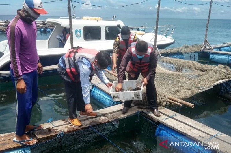 PLN Situbondo bantu 3.000 bibit lobster untuk pembudidaya