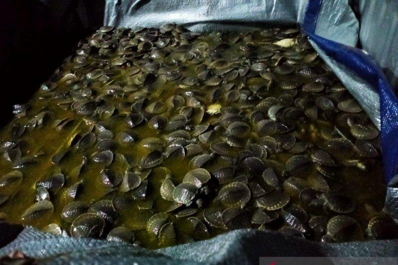 Gakkum KLHK Sulawesi gagalkan perdagangan 1.301 binatang langka