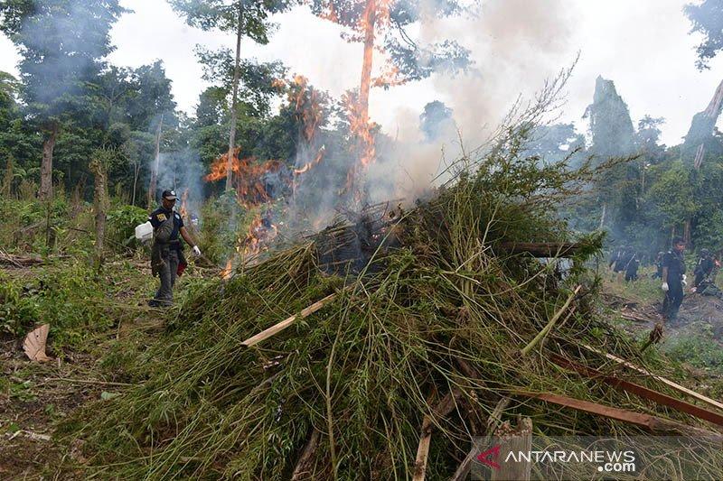 BNN musnahkan 3,5 hektare ladang ganja di Lamteuba Aceh Besar
