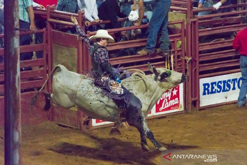 Kompetisi  Rodeo di Texas