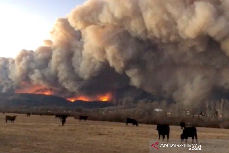 Kebakaran hutan di Colorado