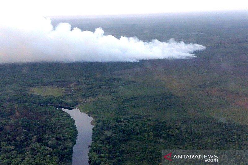 Luas hutan dan lahan yang terbakar di Riau turun 99 persen lebih