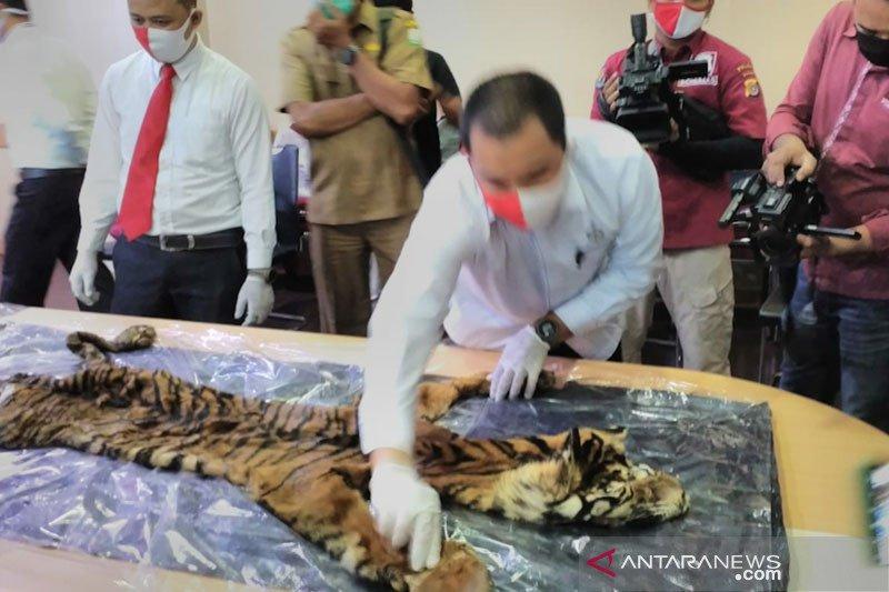 BKSDA Aceh terima tiga barang bukti kulit harimau sepanjang 2020