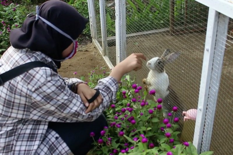 Warga antusias Taman Kelinci Rawa Borang  dibuka kembali