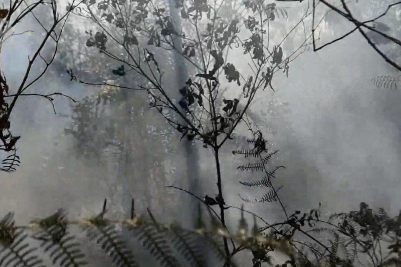Jumlah lahan terbakar turun drastis, status siaga karhutla Riau dicabut