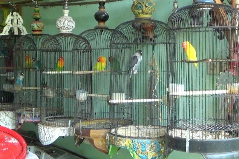 Pedagang burung pacu kreativitas penuhi kebutuhan dimasa pandemi