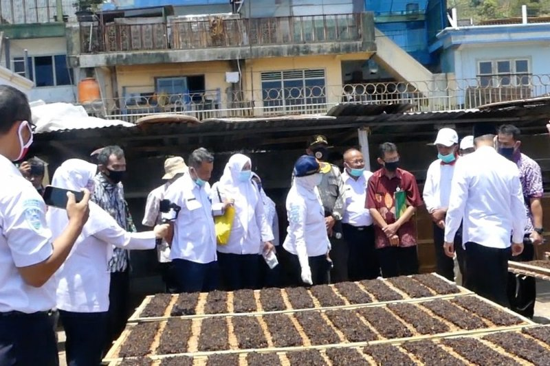 SLI BMKG bantu tingkatkan produktivitas tembakau Temanggung
