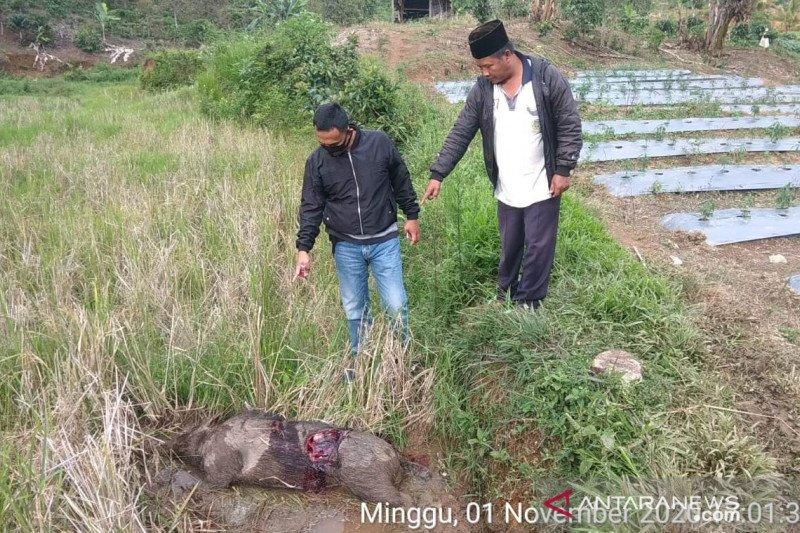 Polsek Bermani Ulu selidiki aktivitas perburuan ilegal