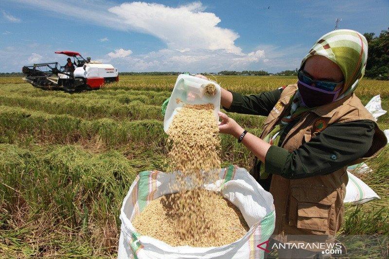 Relaksasi UU Cipta Kerja dinilai mampu dorong produktivitas pertanian