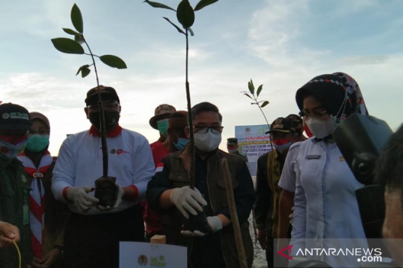Wamen LHK: Realisasi padat karya penanaman mangrove capai 65 persen